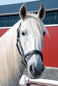 Xxxx är en av våra spanska hästar.